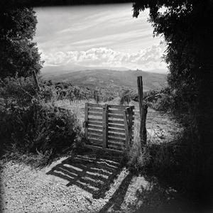 Barrie`re-de-bois-Val-d'Orcia-corpo