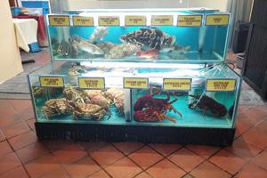11-pesci-corpo