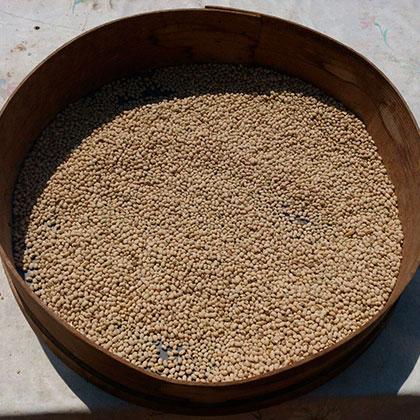 fagiolina-del-lago-secca-2-corpo