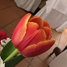tulipano-corpo