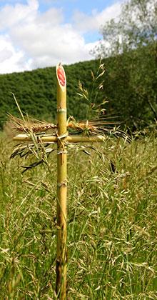 La-crocedel-grano-3--corpo