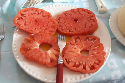 bistecche-di-pomodori-ok-web