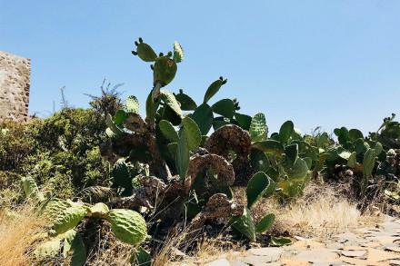 cactus-2-web